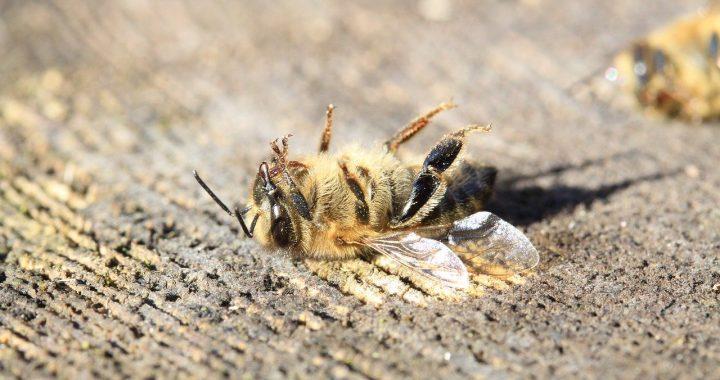 PRESSEMITTEILUNG: Verbot des Bienen-Killers Thiacloprid