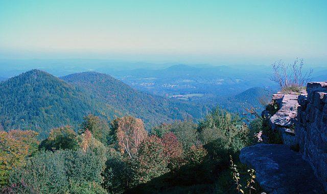 Wald, Biodiversität und der Statusbericht der europäischen Umweltagentur